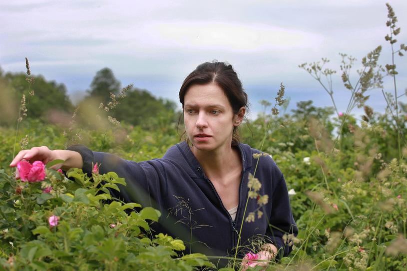 Dzikie Róże (5)