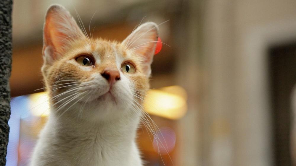 Kedi (6)
