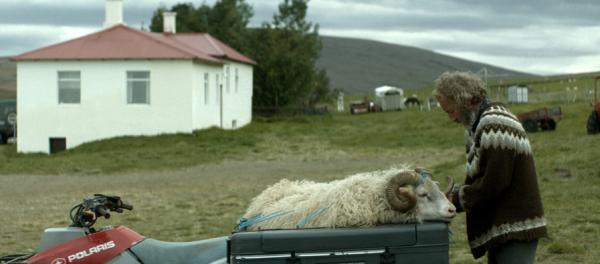 Barany. Islandzka Opowieść (1)