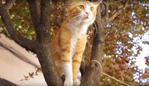 Kedi (1)