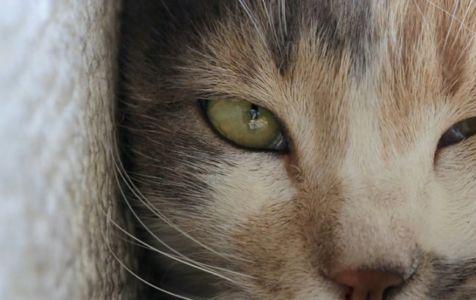 Kedi (3)