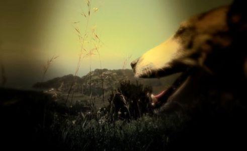 Serce Psa (5)